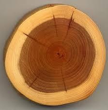 Tetti in legno moderni